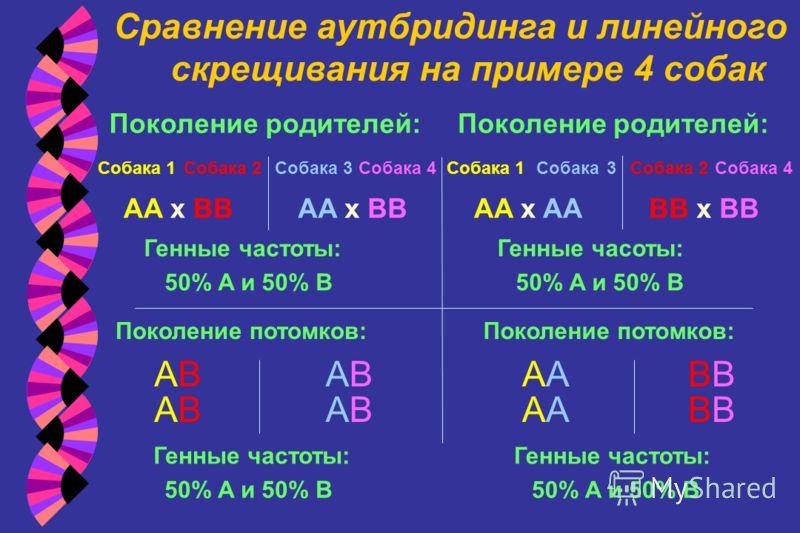 Сравнение аутбридинга и линейного скрещивания на примере 4 собак ABAB ABAB ABAB ABAB Поколение потомков: Генные частоты: 50% A и 50% B A A B B Поколение потомков: Генные частоты: 50% A и 50% B AA x AABB x BB Собака 1 Собака 2 Собака 3 Собака 4 Поколе