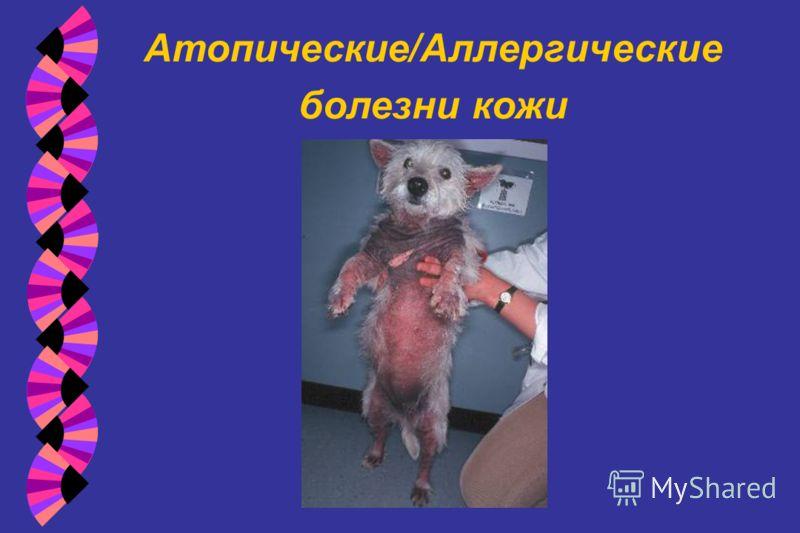 Атопические/Аллергические болезни кожи