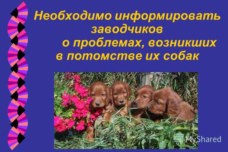 Необходимо информировать заводчиков о проблемах, возникших в потомстве их собак