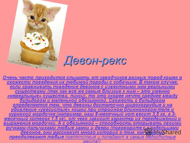 Девон-рекс Очень часто приходится слышать от заводчиков разных пород кошек о схожести поведения их любимой породы с собачьим. В таком случае, если сравнивать поведение девонов с известными нам реальными существами (так как все же самые близкие к ним