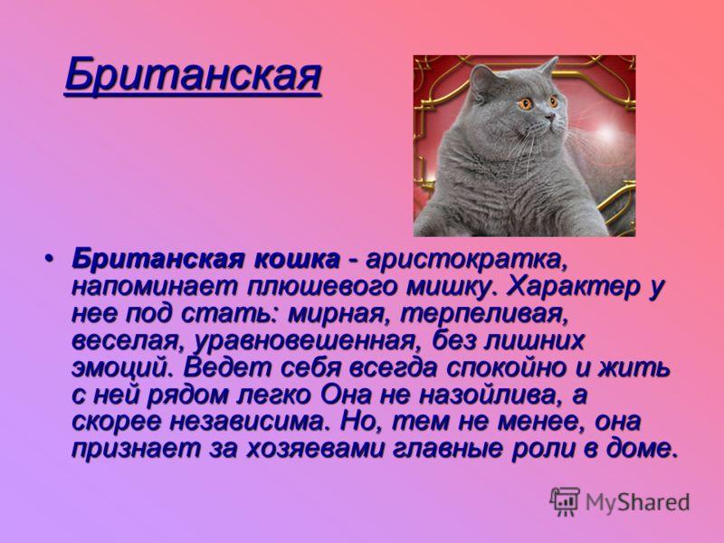 Британская Британская кошка - аристократка, напоминает плюшевого мишку. Характер у нее под стать: мирная, терпеливая, веселая, уравновешенная, без лишних эмоций. Ведет себя всегда спокойно и жить с ней рядом легко Она не назойлива, а скорее независим