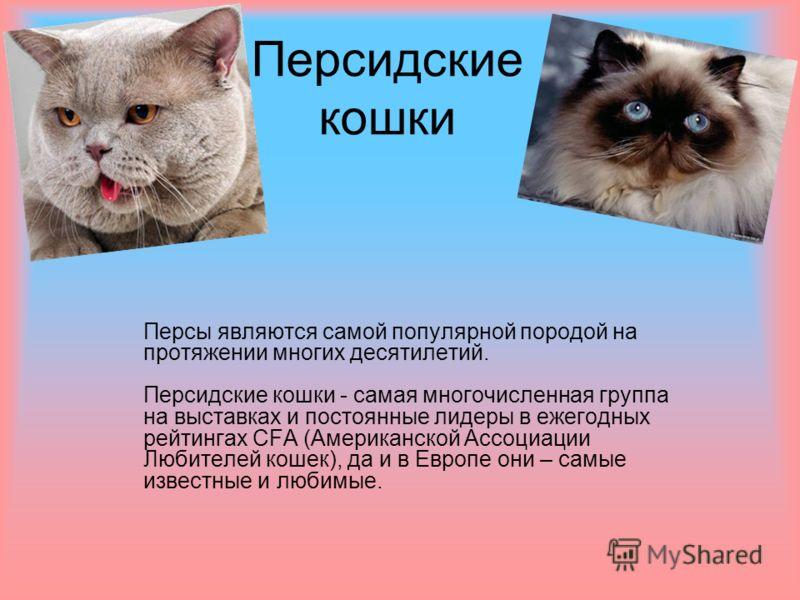 Персидские кошки Персы являются самой популярной породой на протяжении многих десятилетий. Персидские кошки - самая многочисленная группа на выставках и постоянные лидеры в ежегодных рейтингах CFA (Американской Ассоциации Любителей кошек), да и в Евр