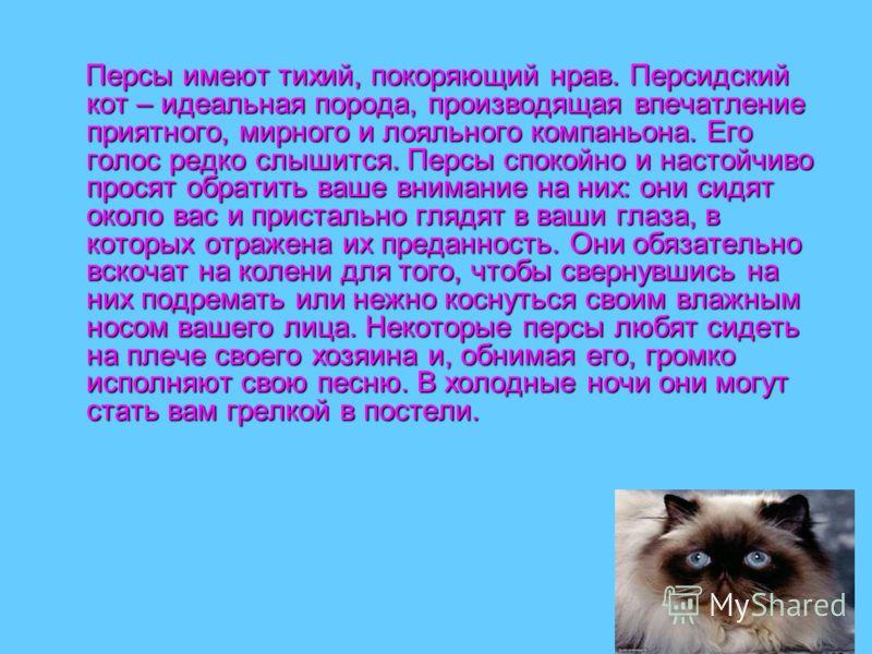 Персы имеют тихий, покоряющий нрав. Персидский кот – идеальная порода, производящая впечатление приятного, мирного и лояльного компаньона. Его голос редко слышится. Персы спокойно и настойчиво просят обратить ваше внимание на них: они сидят около вас