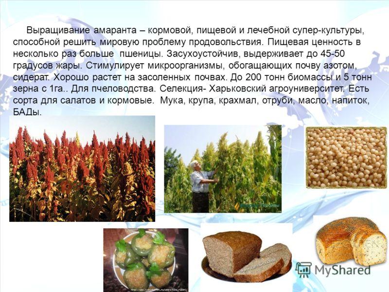 Выращивание амаранта – кормовой, пищевой и лечебной супер-культуры, способной решить мировую проблему продовольствия. Пищевая ценность в несколько раз больше пшеницы. Засухоустойчив, выдерживает до 45-50 градусов жары. Стимулирует микроорганизмы, обо
