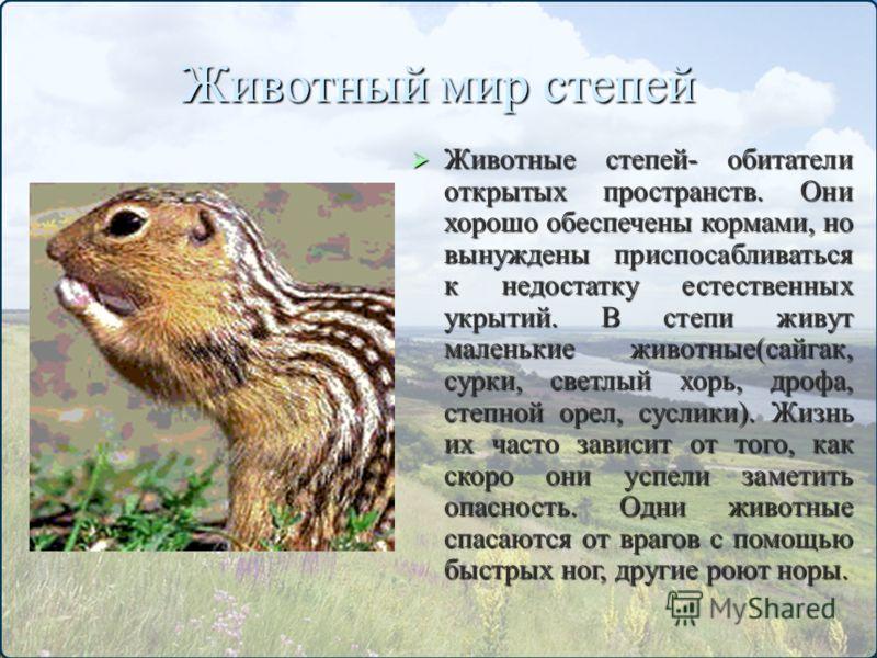Животный мир степей Животные степей- обитатели открытых пространств. Они хорошо обеспечены кормами, но вынуждены приспосабливаться к недостатку естественных укрытий. В степи живут маленькие животные(сайгак, сурки, светлый хорь, дрофа, степной орел, с