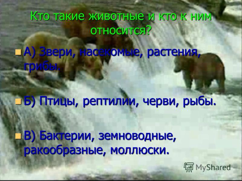 Кто такие животные и кто к ним относится? А) Звери, насекомые, растения, грибы. А) Звери, насекомые, растения, грибы. Б) Птицы, рептилии, черви, рыбы. Б) Птицы, рептилии, черви, рыбы. В) Бактерии, земноводные, ракообразные, моллюски. В) Бактерии, зем