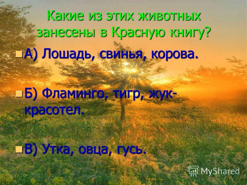 Какие из этих животных занесены в Красную книгу? А) Лошадь, свинья, корова. А) Лошадь, свинья, корова. Б) Фламинго, тигр, жук- красотел. Б) Фламинго, тигр, жук- красотел. В) Утка, овца, гусь. В) Утка, овца, гусь.