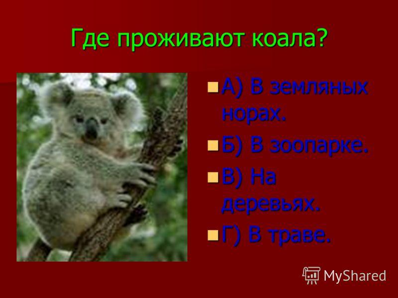 Где проживают коала? А) В земляных норах. А) В земляных норах. Б) В зоопарке. Б) В зоопарке. В) На деревьях. В) На деревьях. Г) В траве. Г) В траве.