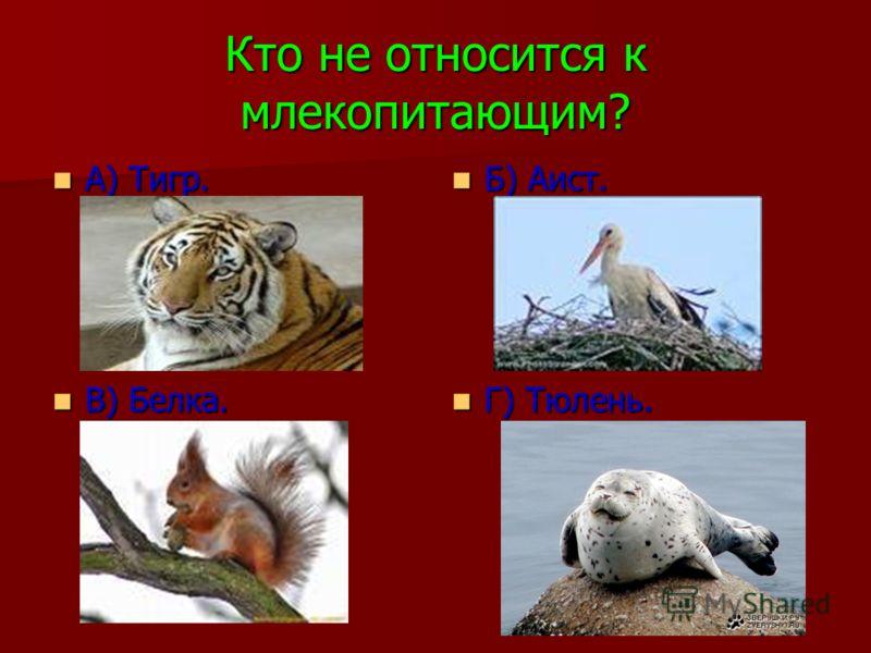 Кто не относится к млекопитающим? А) Тигр. А) Тигр. Б) Аист. Б) Аист. В) Белка. В) Белка. Г) Тюлень. Г) Тюлень.