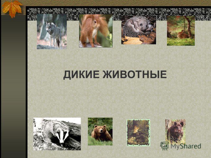 Тема дикие и домашние животные