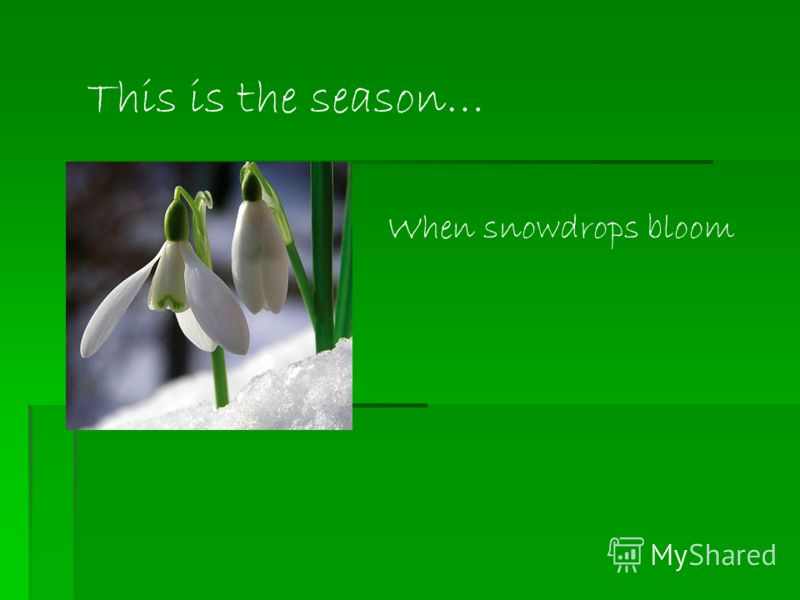 When snowdrops bloom This is the season…