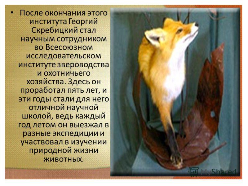 После окончания этого института Георгий Скребицкий стал научным сотрудником во Всесоюзном исследовательском институте звероводства и охотничьего хозяйства. Здесь он проработал пять лет, и эти годы стали для него отличной научной школой, ведь каждый г