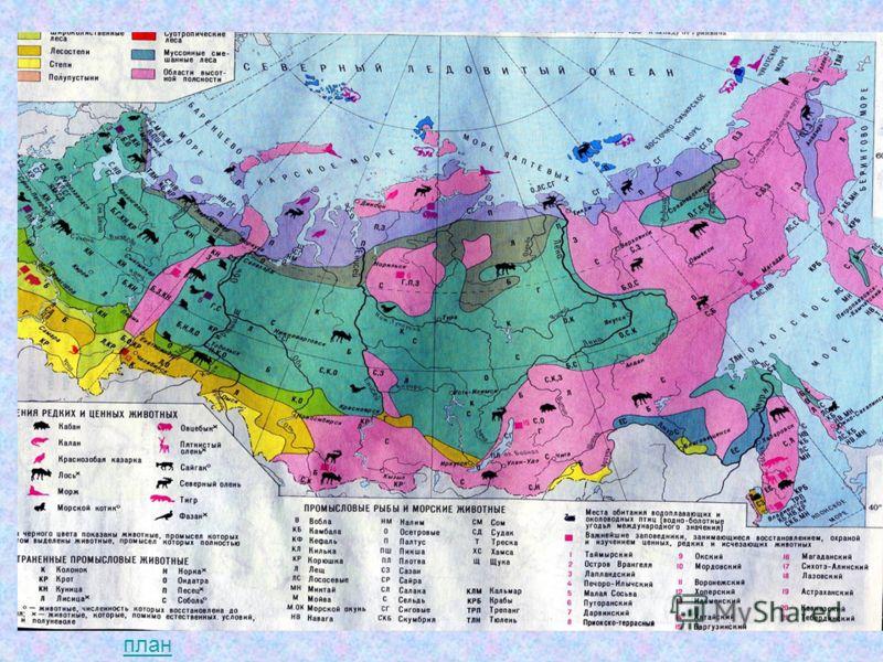Работа с картой Найдите остров Новая Земля. Южнее ледяной зоны вдоль берегов северных морей протянулась зона тундры. план