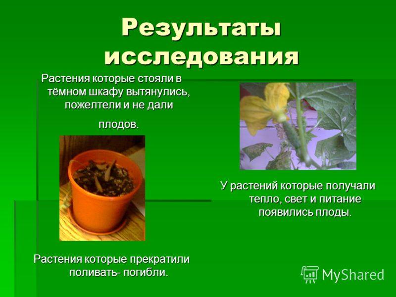 Результаты исследования Растения которые стояли в тёмном шкафу вытянулись, пожелтели и не дали плодов. Растения которые прекратили поливать- погибли. У растений которые получали тепло, свет и питание появились плоды.