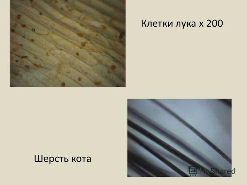 Клетки лука х 200 Шерсть кота