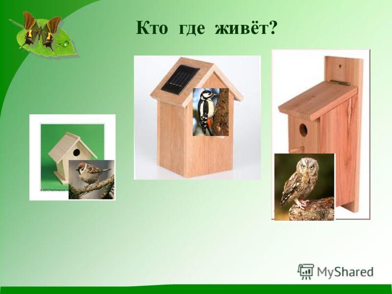Отгадайте рост птицы 11 см14 см19 см