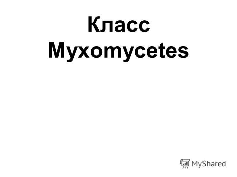 Класс Myxomycetes