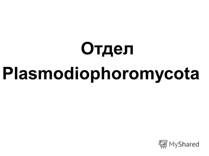 Отдел Plasmodiophoromycota