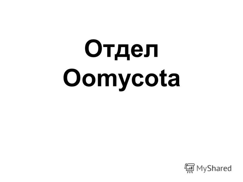 Отдел Oomycota