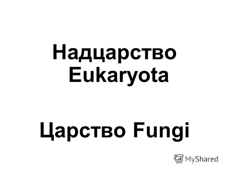 Надцарство Eukaryota Царство Fungi