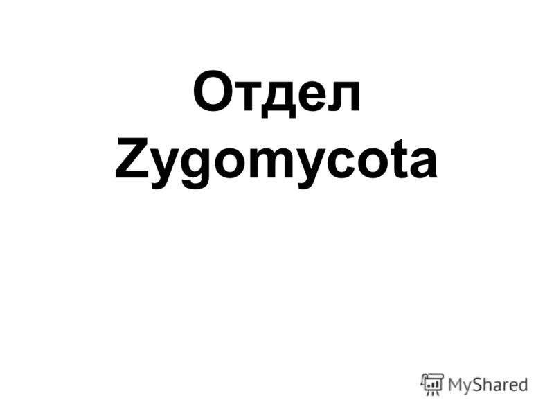 Отдел Zygomycota