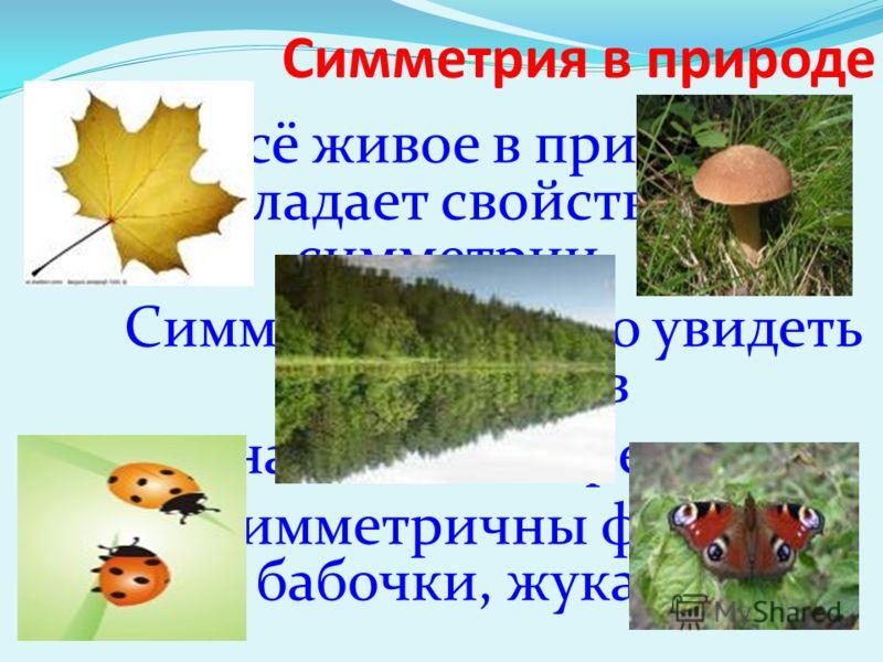 Симметрия в природе Всё живое в природе обладает свойством симметрии. Симметрию можно увидеть среди цветов и на листьях деревьев. Симметричны формы бабочки, жука.