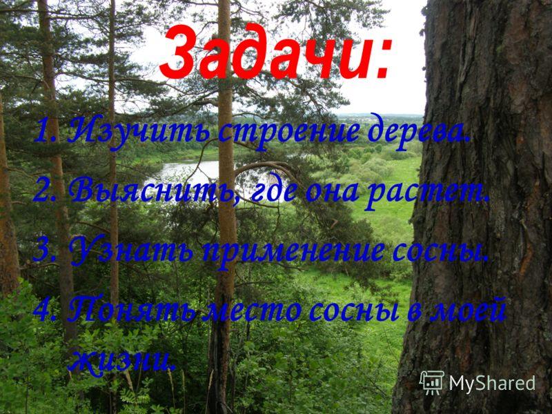 Задачи: 1.Изучить строение дерева. 2.Выяснить, где она растет. 3.Узнать применение сосны. 4.Понять место сосны в моей жизни.