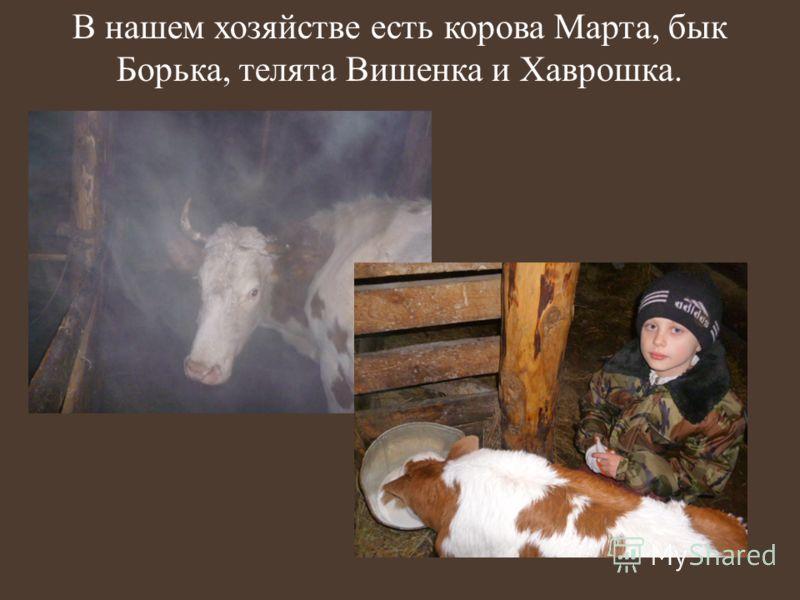 В нашем хозяйстве есть корова Марта, бык Борька, телята Вишенка и Хаврошка.
