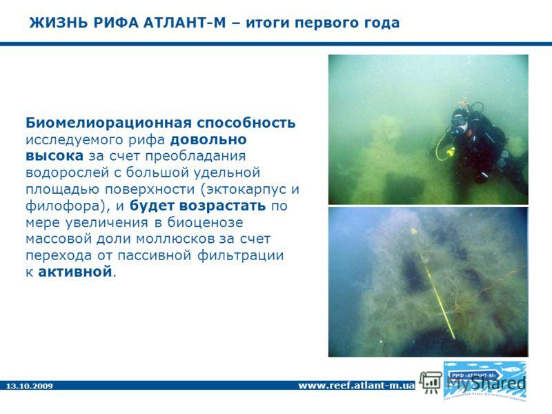 13.10.2009 www.reef.atlant-m.ua ЖИЗНЬ РИФА АТЛАНТ-М – итоги первого года Биомелиорационная способность исследуемого рифа довольно высока за счет преобладания водорослей с большой удельной площадью поверхности (эктокарпус и филофора), и будет возраста
