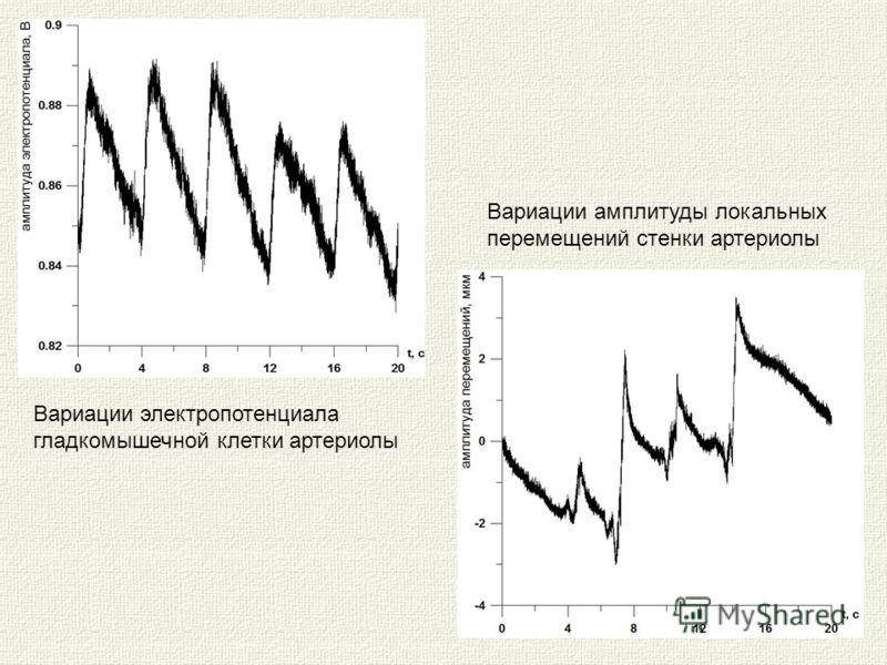 Вариации электропотенциала гладкомышечной клетки артериолы Вариации амплитуды локальных перемещений стенки артериолы