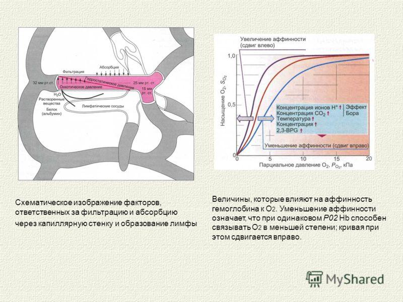 Схематическое изображение факторов, ответственных за фильтрацию и абсорбцию через капиллярную стенку и образование лимфы Величины, которые влияют на аффинность гемоглобина к О 2. Уменьшение аффинности означает, что при одинаковом Р02 Hb способен свя