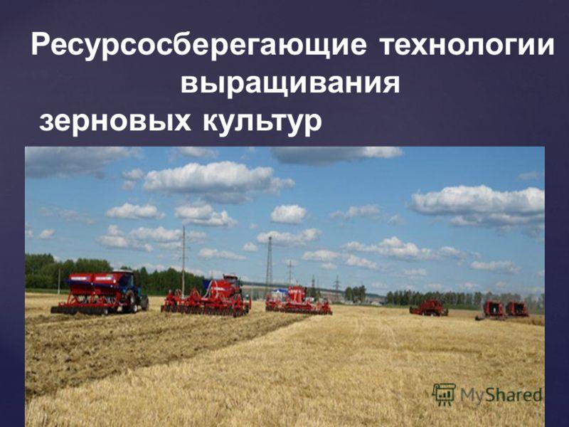 Ресурсосберегающие технологии выращивания зерновых культур
