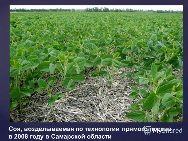 Соя, возделываемая по технологии прямого посева в 2008 году в Самарской области