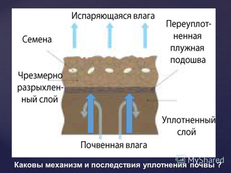 Каковы механизм и последствия уплотнения почвы ?