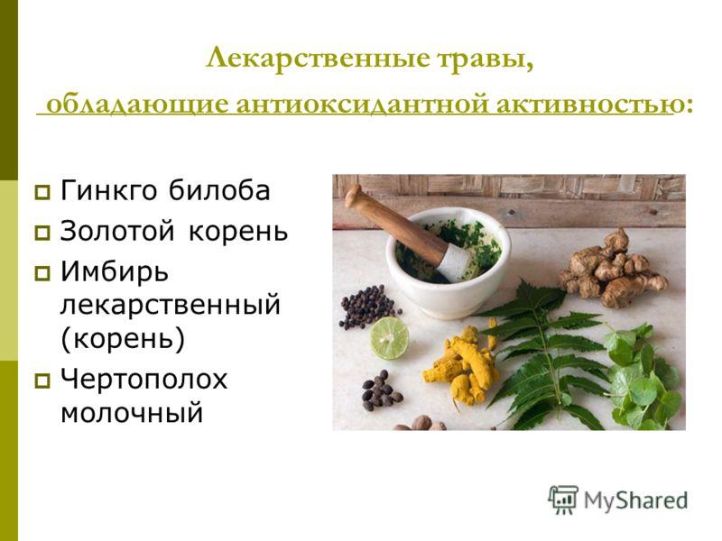 Лекарственные травы, обладающие антиоксидантной активностью: Гинкго билоба Золотой корень Имбирь лекарственный (корень) Чертополох молочный