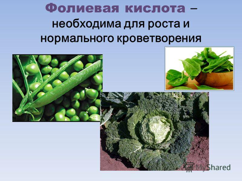 Фолиевая кислота – необходима для роста и нормального кроветворения