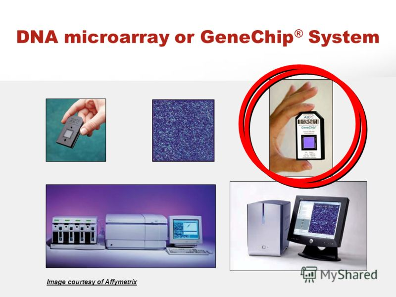 DNA microarray or GeneChip ® System Image courtesy of Affymetrix