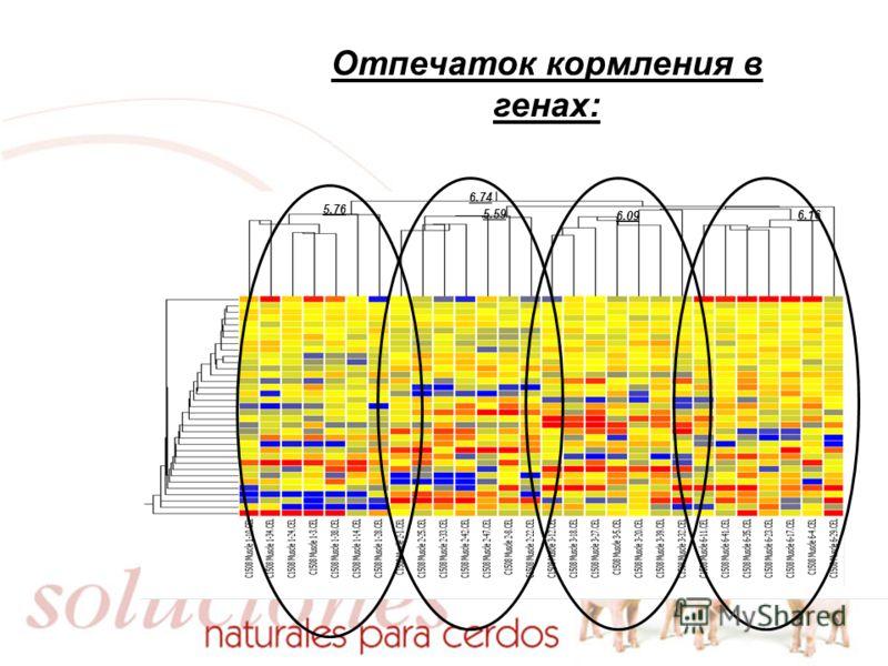 Отпечаток кормления в генах: 5.76 5.59 6.74 6.09 6.16