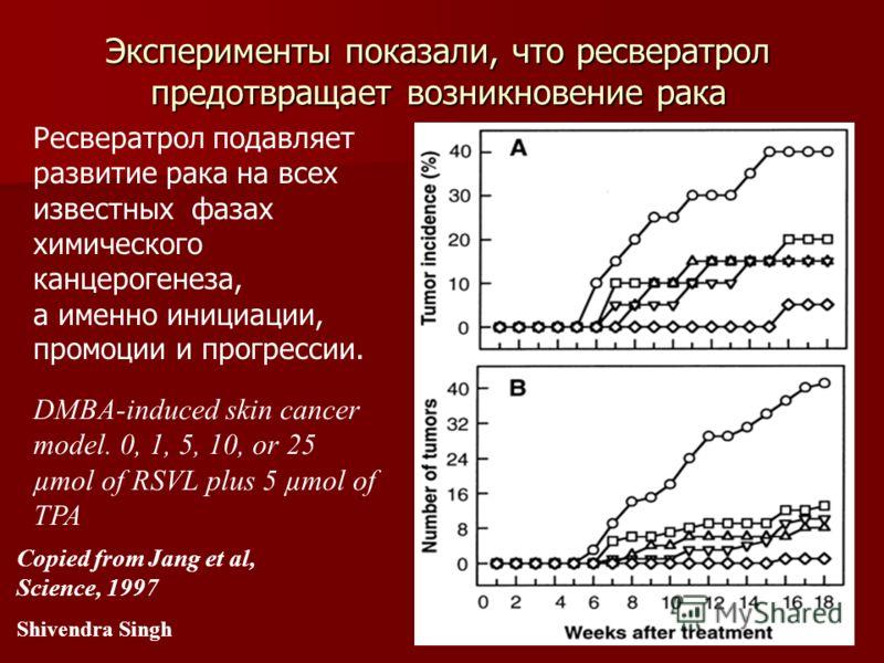 Вино поможет справиться с лишним весом Ресвератрол подавляет развитие рака на всех известных фазах химического канцерогенеза, а именно инициации, промоции и прогрессии. Copied from Jang et al, Science, 1997 Shivendra Singh Эксперименты показали, что