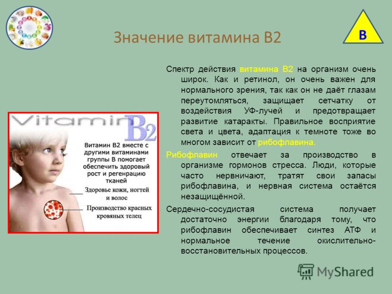 Значение витамина В2 Спектр действия витамина В2 на организм очень широк. Как и ретинол, он очень важен для нормального зрения, так как он не даёт глазам переутомляться, защищает сетчатку от воздействия УФ-лучей и предотвращает развитие катаракты. Пр