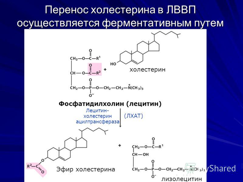 Перенос холестерина в ЛВВП осуществляется ферментативным путем Фосфатидилхолин (лецитин) Лецитин- холестерин ацилтрансфераза (ЛХАТ) холестерин Эфир холестерина лизолецитин