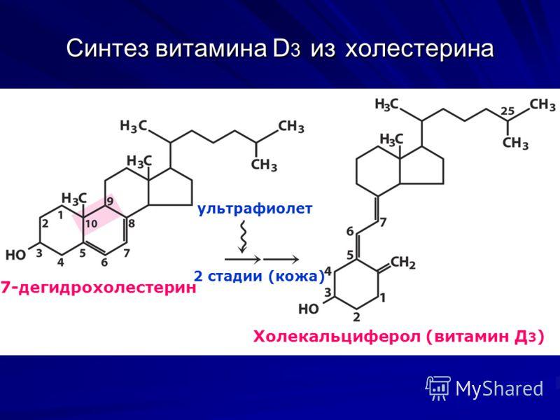 Синтез витамина D 3 из холестерина Холекальциферол (витамин Д 3 ) ультрафиолет 7-дегидрохолестерин 2 стадии (кожа)