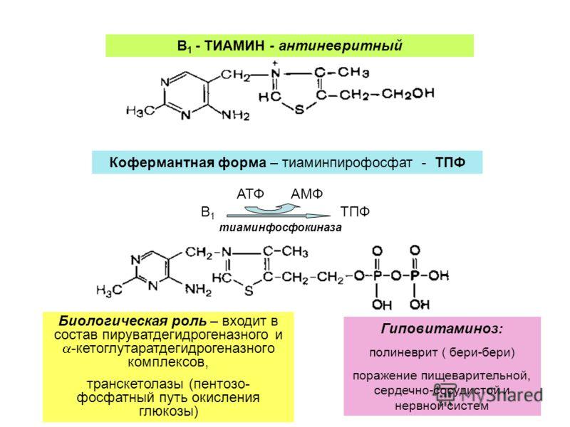 В 1 - ТИАМИН - антиневритный Кофермантная форма – тиаминпирофосфат - ТПФ B1B1 АТФАМФ ТПФ тиаминфосфокиназа Биологическая роль – входит в состав пируватдегидрогеназного и -кетоглутаратдегидрогеназного комплексов, транскетолазы (пентозо- фосфатный путь
