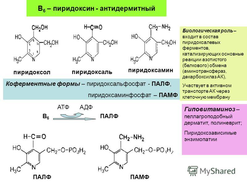 В 6 – пиридоксин - антидермитный пиридоксол пиридоксаль пиридоксамин Коферментные формы – пиридоксальфосфат - ПАЛФ, пиридоксаминфосфат – ПАМФ B6B6 АТФАДФ ПАЛФ ПАМФ Биологическая роль – входит в состав пиридоксалевых ферментов, катализирующих основные