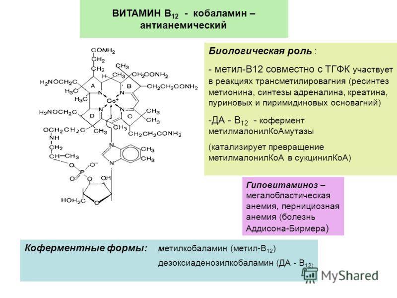 ВИТАМИН В 12 - кобаламин – антианемический Коферментные формы: метилкобаламин (метил-В 12 ) дезоксиаденозилкобаламин (ДА - В 12) Биологическая роль : - метил-В12 совместно с ТГФК участвует в реакциях трансметилировагния (ресинтез метионина, синтезы а