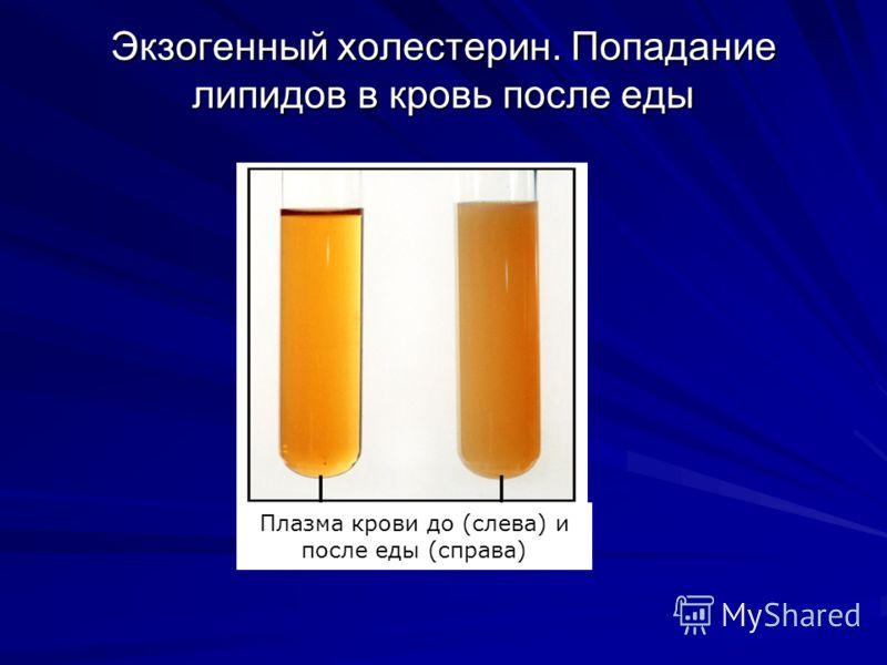 Экзогенный холестерин. Попадание липидов в кровь после еды Плазма крови до (слева) и после еды (справа)