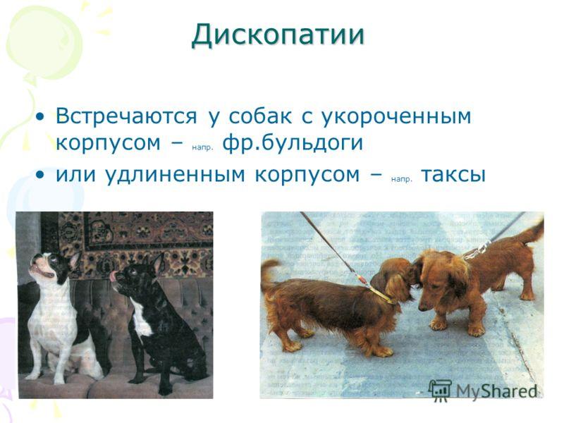 Дископатии Встречаются у собак с укороченным корпусом – напр. фр.бульдоги или удлиненным корпусом – напр. таксы