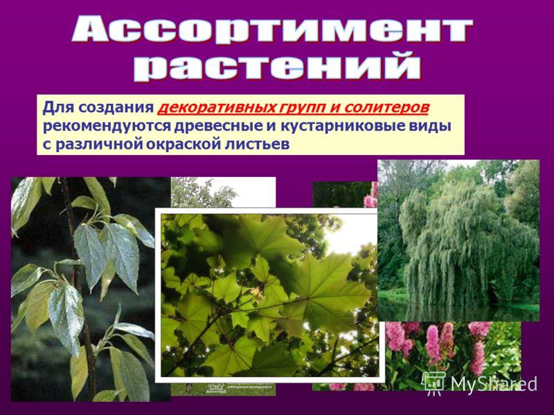 Для создания декоративных групп и солитеров рекомендуются древесные и кустарниковые виды с различной окраской листьев