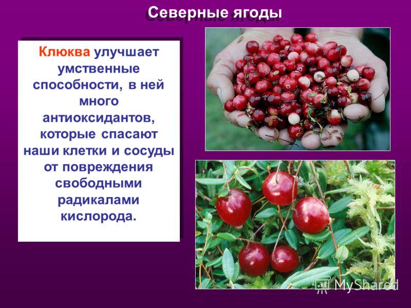 Северные ягоды Клюква улучшает умственные способности, в ней много антиоксидантов, которые спасают наши клетки и сосуды от повреждения свободными радикалами кислорода.