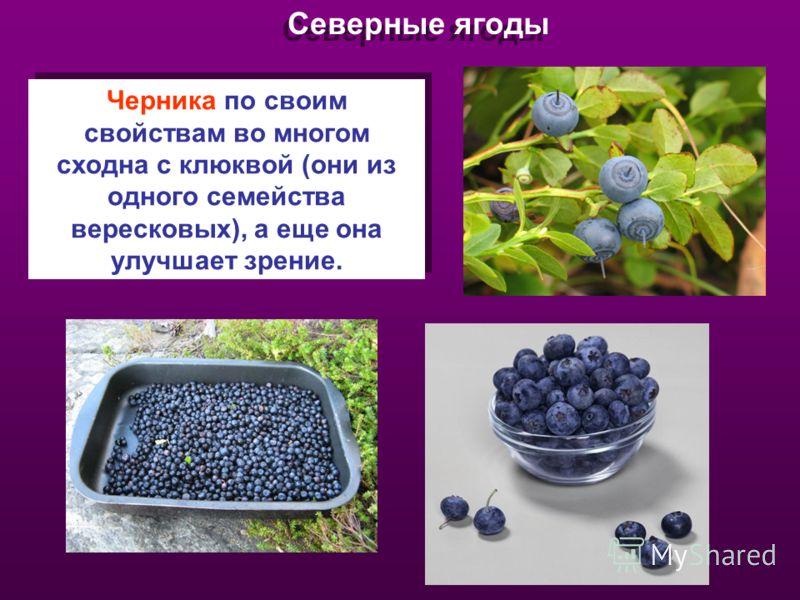 Северные ягоды Черника по своим свойствам во многом сходна с клюквой (они из одного семейства вересковых), а еще она улучшает зрение.